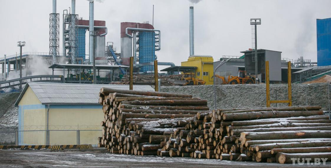 Fact-check: All wood-processing plants loss-making after $4bn-worth